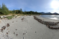 The West end beach