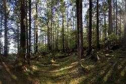Vegetation on Property