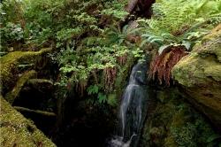 Cape Scott Provincial Park, Vancouver Island