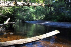 Fisherman River at Cape Scott Provincial Park