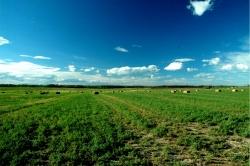Nulki Ranch