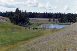 Nulki Lake Ranch