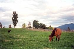 Thompson River Estates Horses