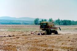 Ranch Haying