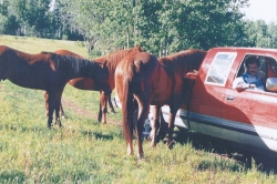 Rudy with Horses