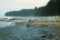 Bear on Cape Scott Provincial Park beach