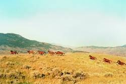 Wild horses in Savona