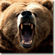 Bear Attack - What would you do?